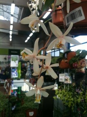orkideutställning1a
