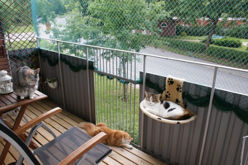 kattanpassad balkong