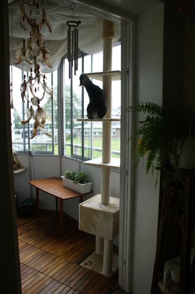 kattmöbel på balkong