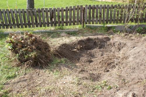 gräva upp jasminträd