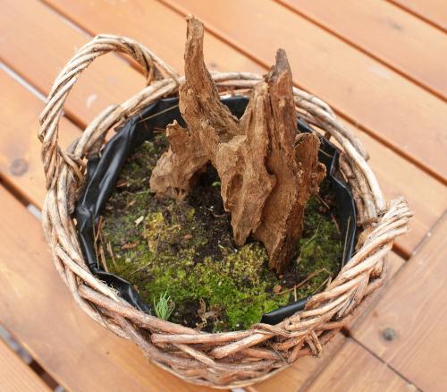plantera på trä