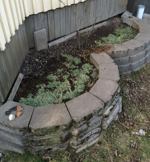 trädgård1c