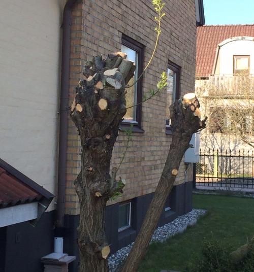 pilträd1d
