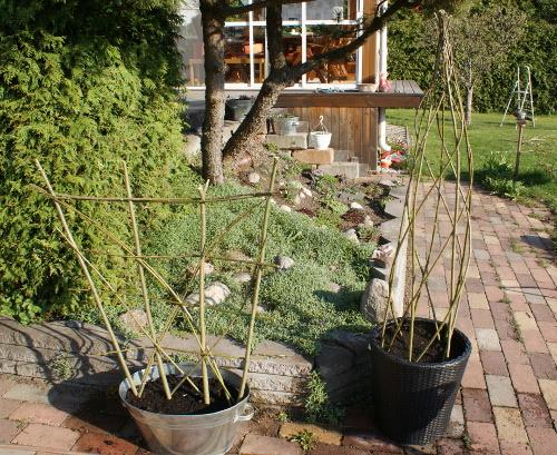 växtstöd av pil