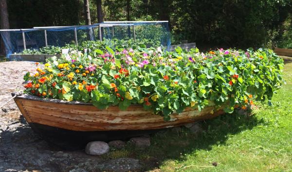 blomstrande båt