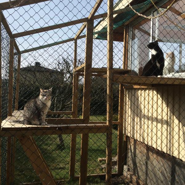 kattgård
