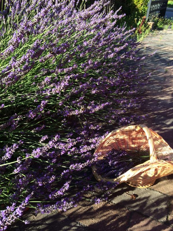 3f_Lavendelkrans
