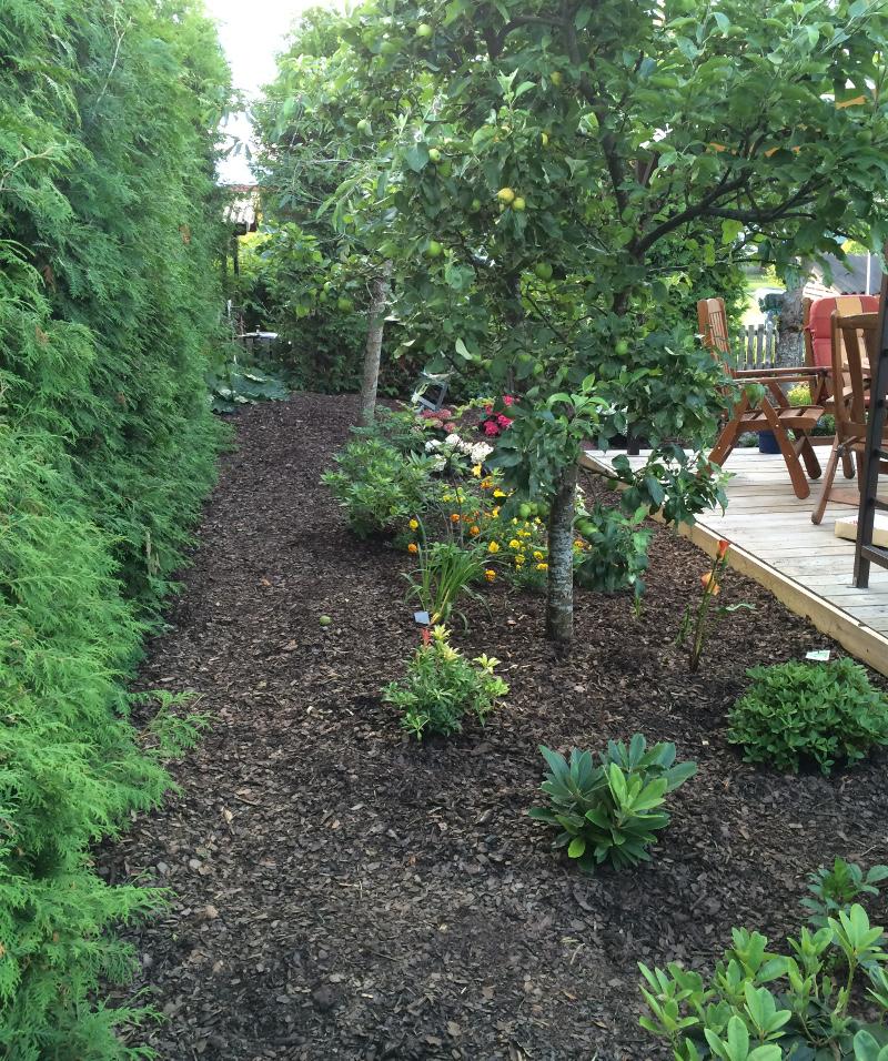 trädgårdsrabatt1f