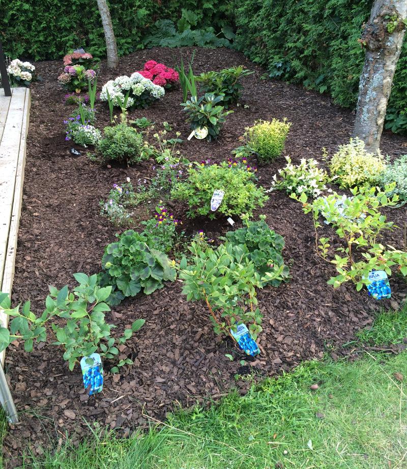 trädgårdsrabatt1h