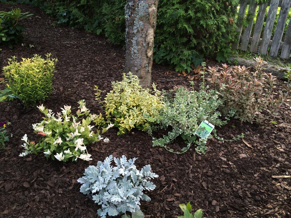trädgårdsrabatt1l