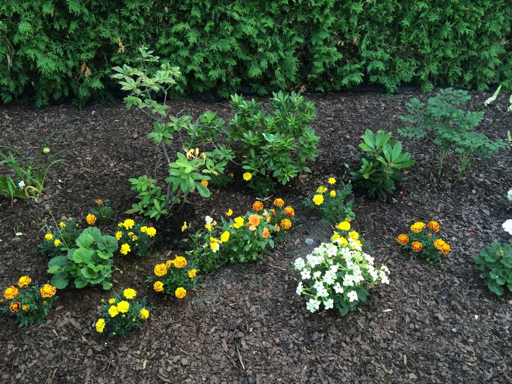 trädgårdsrabatt1o