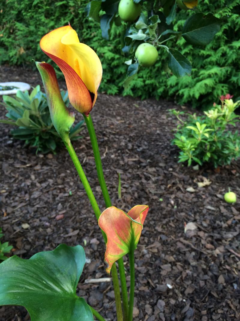 trädgårdsrabatt1p